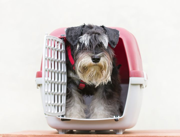 transportin perros