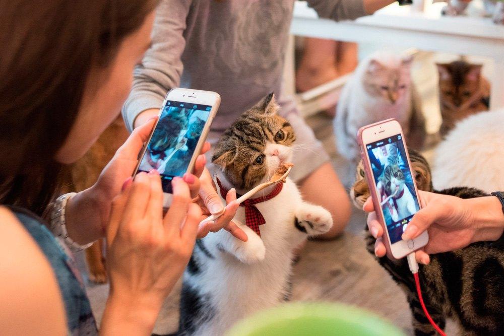 Cafeteria de gatos en Tokio