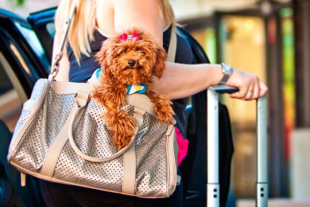 Transportes que admiten mascotas
