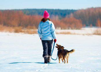 Ir a esquiar con perro