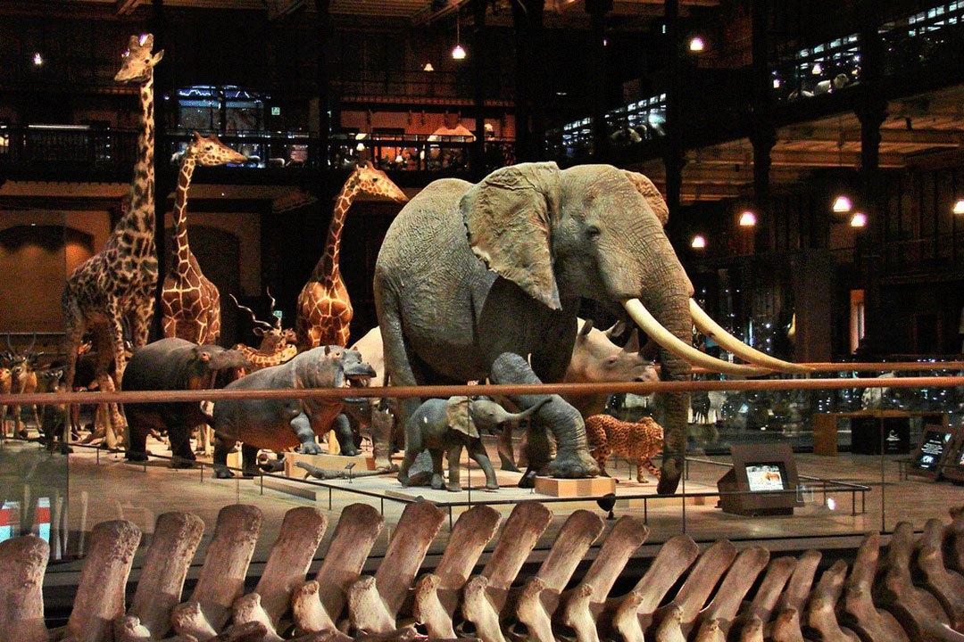 Museo-nacional-de-Historia-Natural-Paris