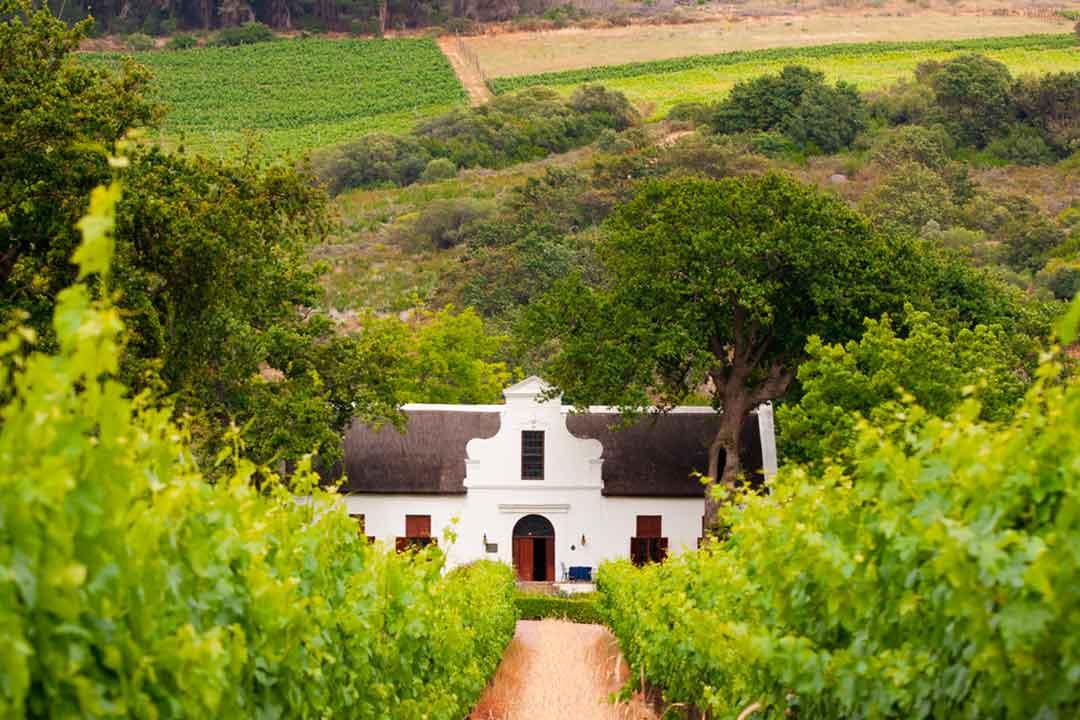 Viñedos y bodegas que ver en Sudafrica