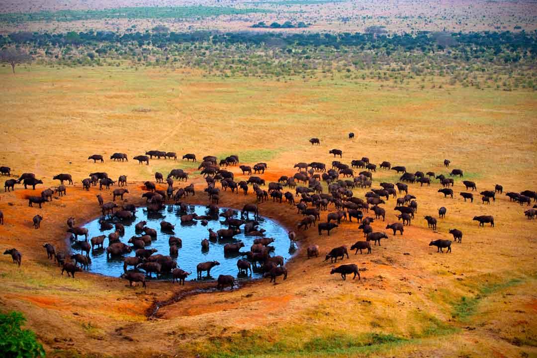 Parke Kruger: Como hacer un safari al viajar a Sudafrica