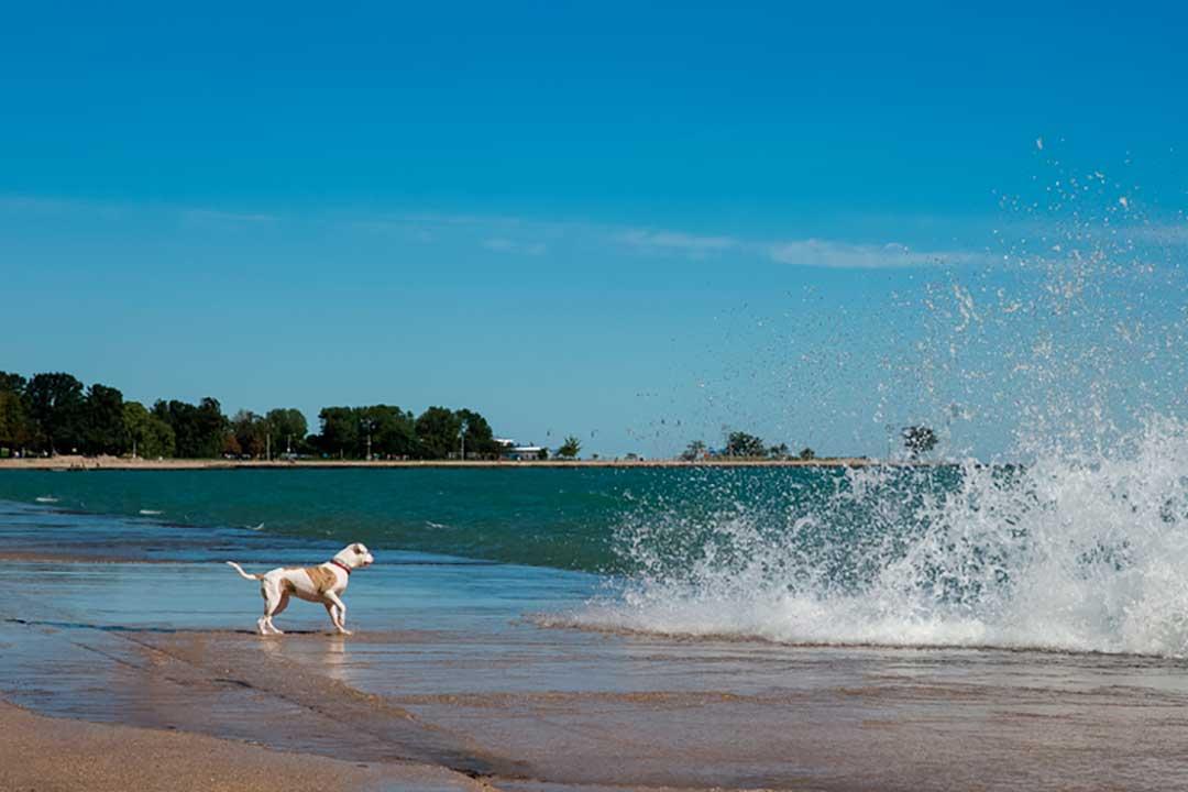 Chicago es una de las mejores ciudades para viajar con mascota a EEUU