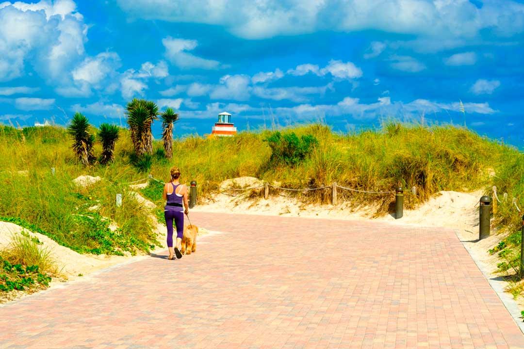 Podrás viajar a Miami con tu mascota y disfrutar de hoteles, terrazas, playas y viajes en taxi