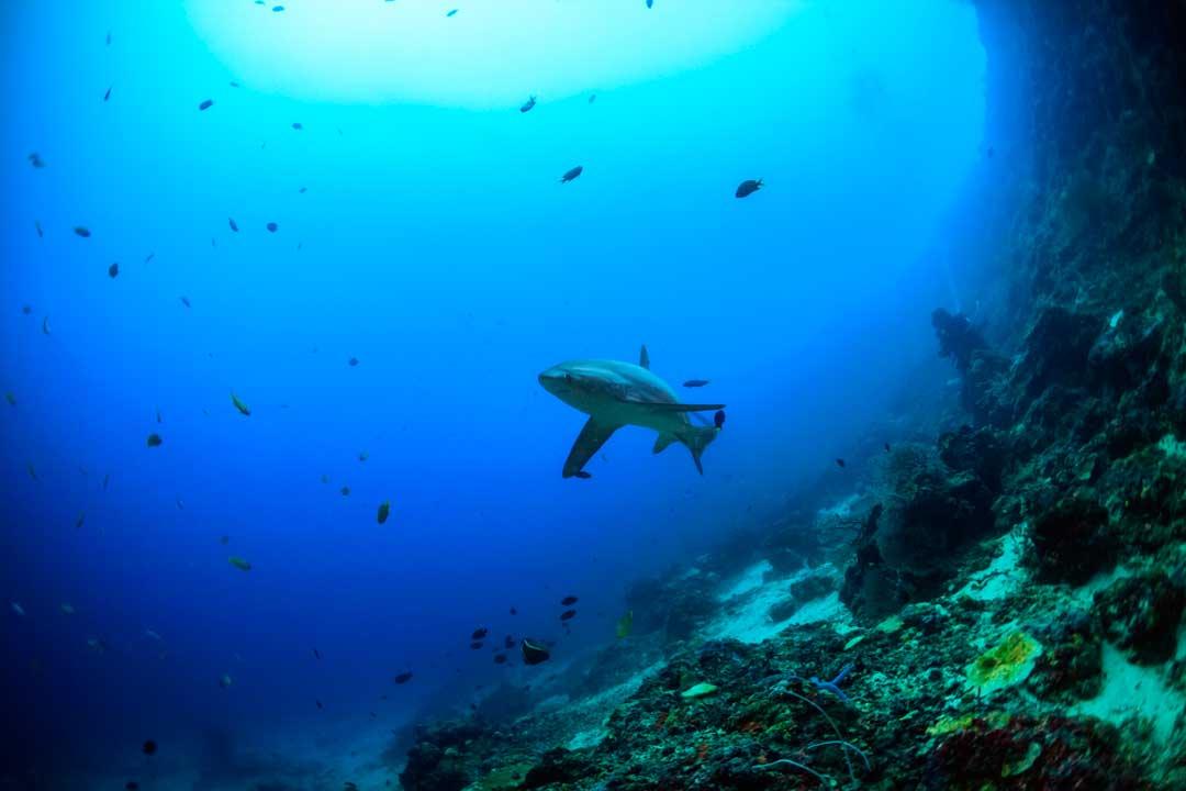 Bucear en Filipinas está cada vez más de moda entre los amantes de los deportes acuáticos