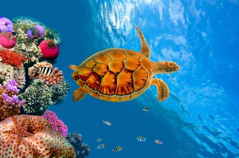 Si decides viajar a tailandia por libre, incluye un curso de buceo en tus reservas