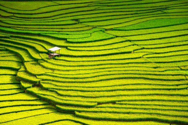Los arrozales de Bali suelen ser de las mejores fotos de viajes en Instagram