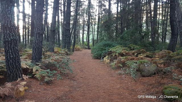 La ruta de las castañas de Ojén es un buen destino donde viajar en noviembre con niños por España
