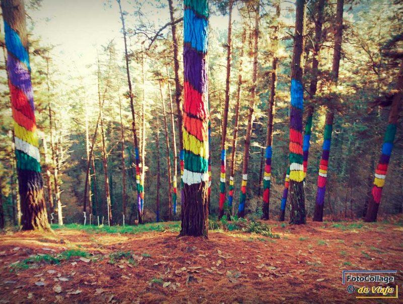 El Bosque de Oma, destino donde viajar en diciembre barato