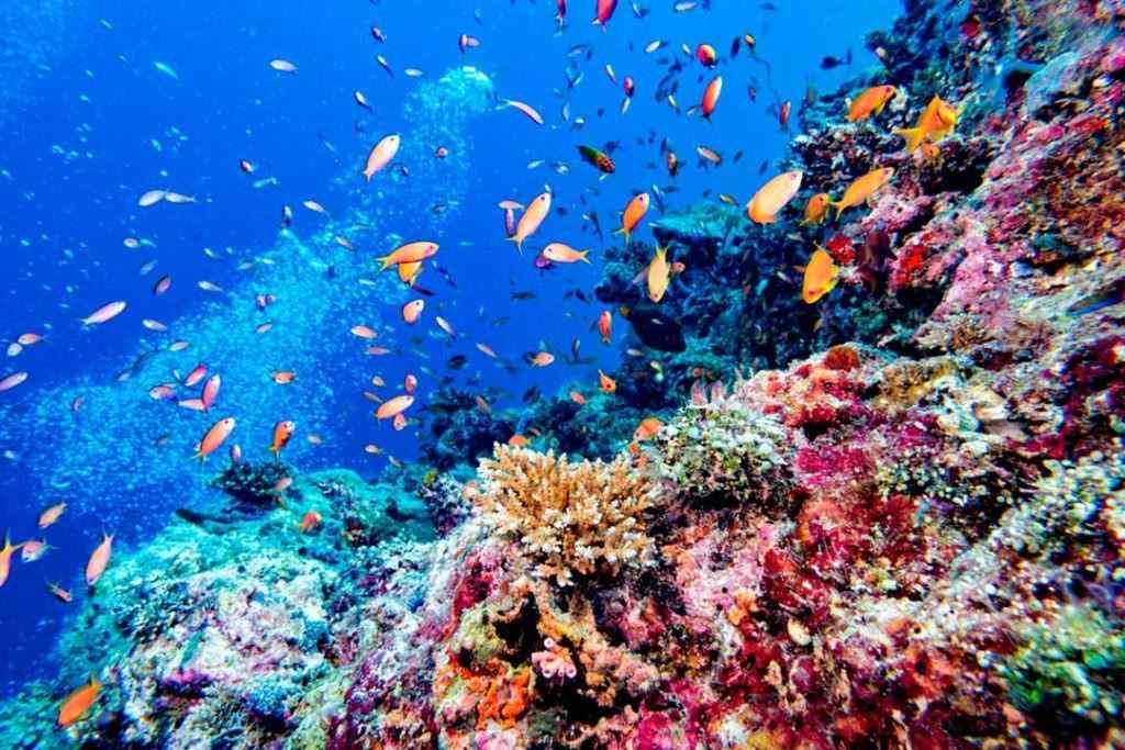 Descubre qué hacer y ver en tu viaje a Maldivas